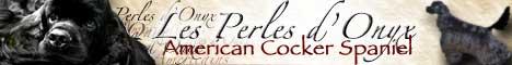 bannière des Perles d'Onyx, élevage de cockers américains