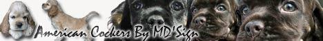 bannière MD'Sign, élevage de cockers américains Suèdois