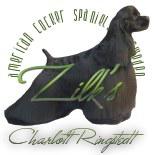 bannière Zilk's, élevage de cockers américains Suèdois
